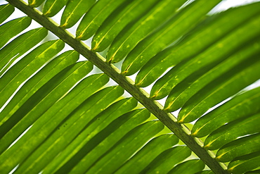 Closeup of fronds
