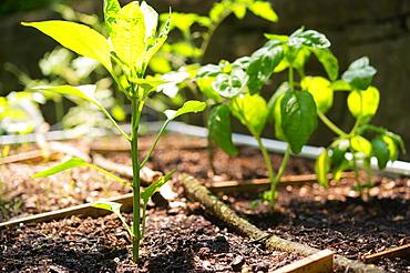 Close-up of seedlings