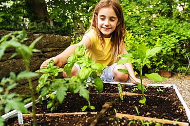 Girl picking basil in garden