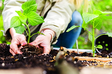 Woman planting seedling