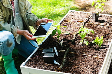 Woman using tablet while planting seedlings