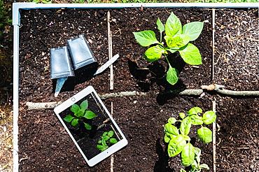 Digital tablet and seedlings