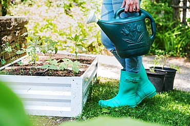 Woman holding watering can by raised garden bed