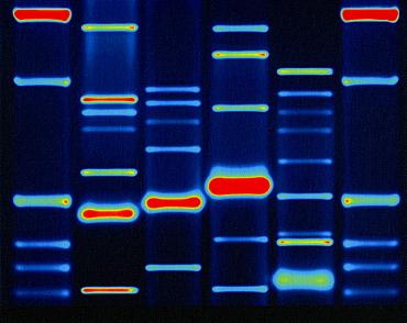 DNA configuration