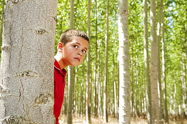USA, Oregon, Boardman, Boy (8-9) playing seekand hide between poplar trees in tree farm