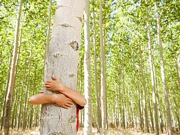 USA, Oregon, Boardman, Boy (8-9) hugging poplar tree in tree farm
