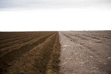 Potato field, Colorado, USA
