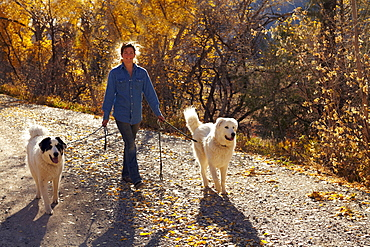 Woman walking her dogs in forest, Colorado, USA