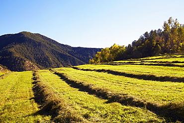 Fields with hay, USA, Western USA, Colorado