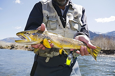 Man holding trout, USA, Wyoming