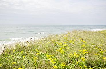 View of sandy beach, Nantucket Island, Massachusetts