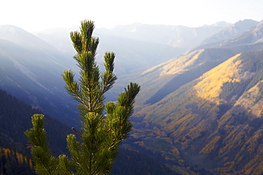 Mountain landscape with pine tree in foreground, Colorado, United States