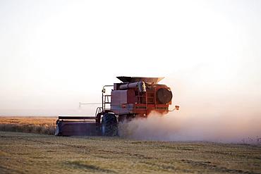 Combiner cutting barley, Colorado, USA