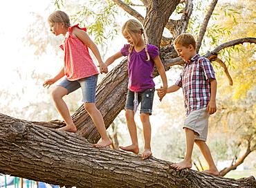 Three kids (4-5, 6-7) balancing on tree branch and walking together holding hands, Lehi, Utah