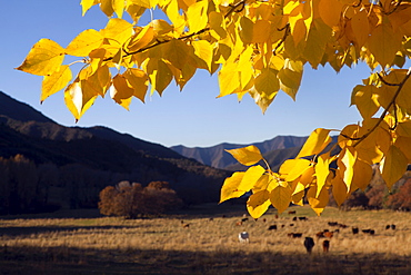 USA, Colorado, Autumn landscape with pasture in background