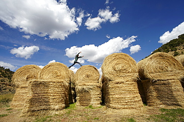 USA, Colorado, Woman jumping on haystacks