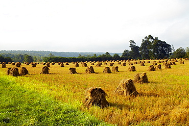 USA, New York State, Field with haystacks