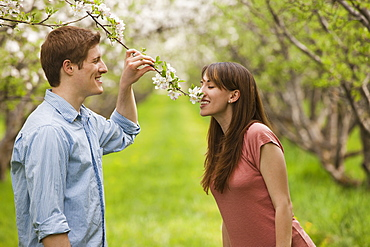 USA, Utah, Provo, Young couple smelling blossom in orchard