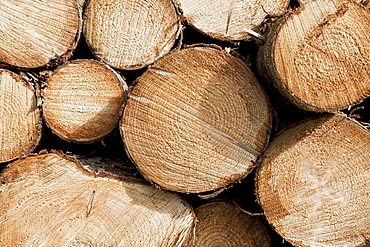 France, Close up-view of firewood stack