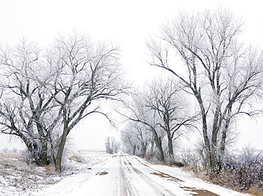 USA, New York State, Country road in winter lined with bare trees