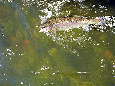 USA, Colorado, Strout struggling with fishing rod