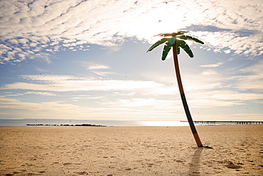 USA, New York City, Coney Island, palm tree on beach