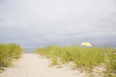USA, Massachusetts, beach umbrella among Marram grass on beach