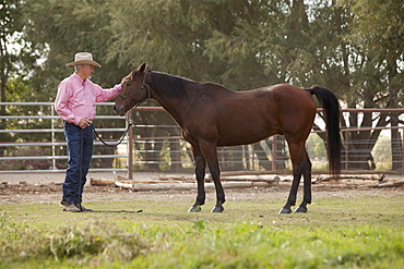 Senior man with horse in ranch