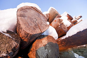 Pile of logs covered in snow