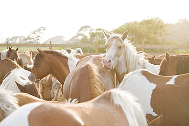 Close up of a herd of horses