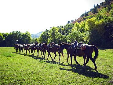 Horses walking in a line