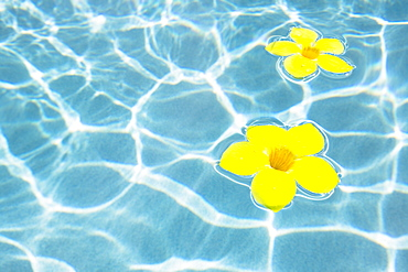 Flowers floating in pool