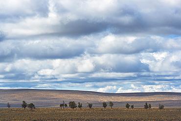 Juniper trees, USA, Oregon, Deschutes County