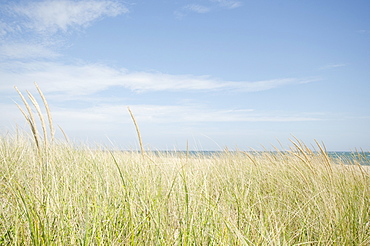 Sand dunes with grass, Nantucket, Massachusetts