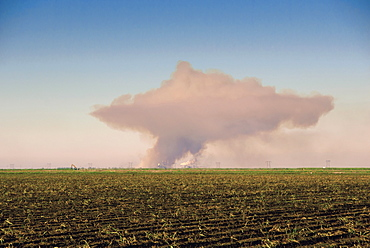 Sugar cane field with smoke on horizon, Florida