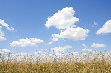 Clouds over meadow