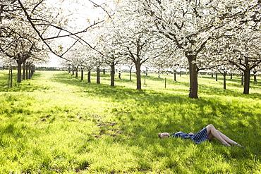 Belgium, Sint-Truiden, Young woman relaxing in spring orchard, Belgium, Sint-Truiden