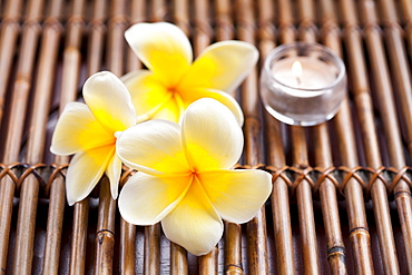 Plumeria flowers and scented candle