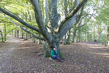 The Netherlands, Veluwezoom, Posbank, Woman sitting under tree in park