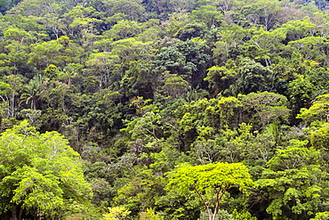 Mexico, Jalisco, Puerto Vallarta, Green forest