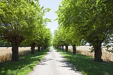 France, Drome, Montvendre, Single lane road lined with trees