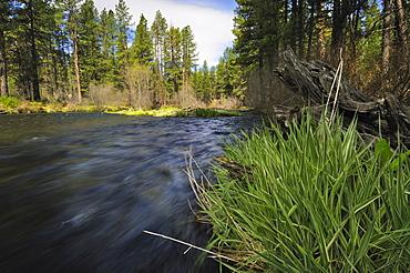 USA, Oregon, Deschutes County, Metolious River