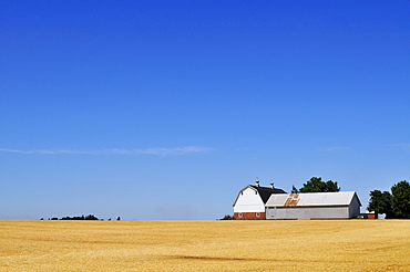 USA, Oregon, Marion County, Farm under blue sky