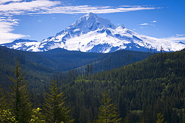 USA, Oregon, View of Mount Hood
