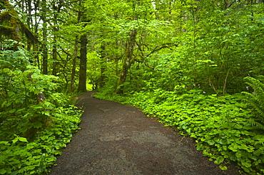 USA, Oregon, Champoeg State Park, Footpath trough forest