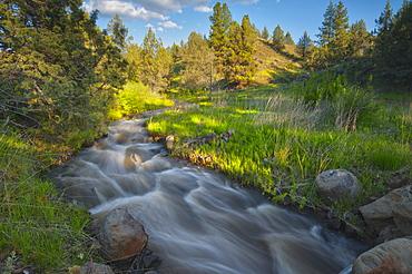USA, Oregon, Kimberly, Scenic view of Rushing Creek