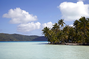 Palm trees on tropical island, French Polynesia, Bora Bora