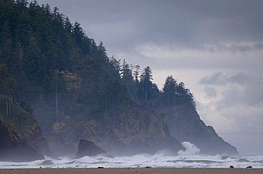 USA, Oregon, Tillamook County, Forest at coast