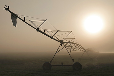 USA, Oregon, Marion County, Irrigation and fog