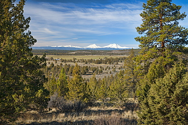 USA, Oregon, Deschutes County, Pines and snowy peaks